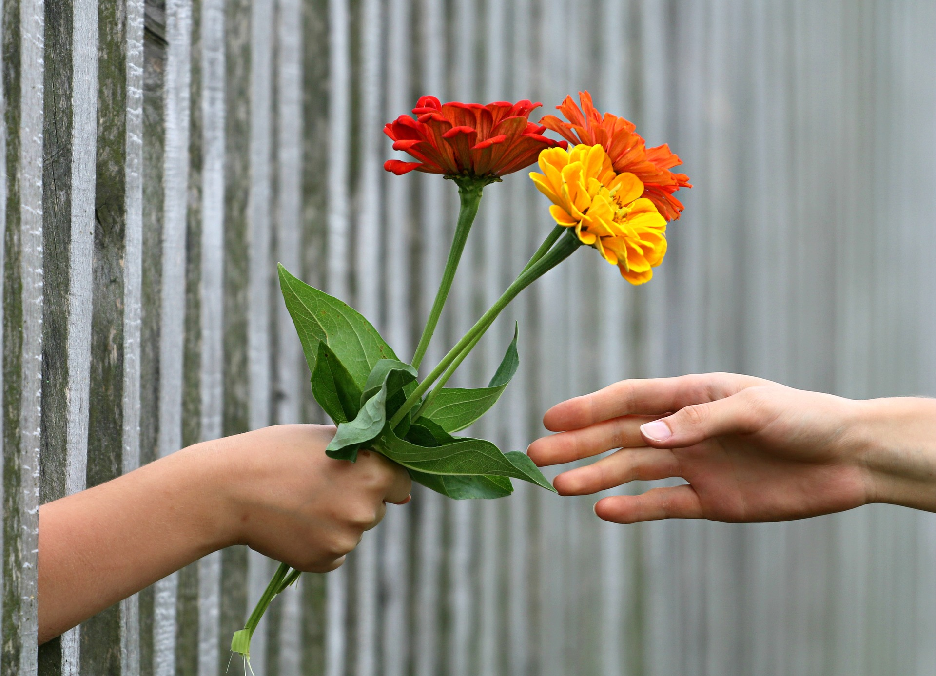 Giving flowers image